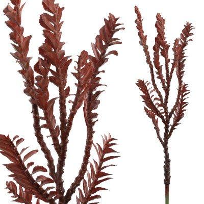 Firawonen.nl Succulent plant burgundy coral succulent pick