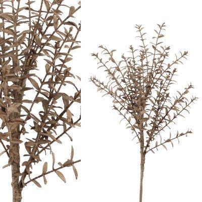 Firawonen.nl PTMD leaves plant bruin buxus struik