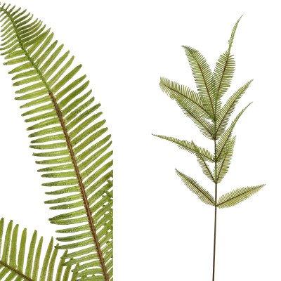 Firawonen.nl Ptmd fern plant groen zachte varentak