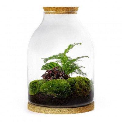 Growing Concepts Dagon Botanisch 35cm / 26cm / Botanisch